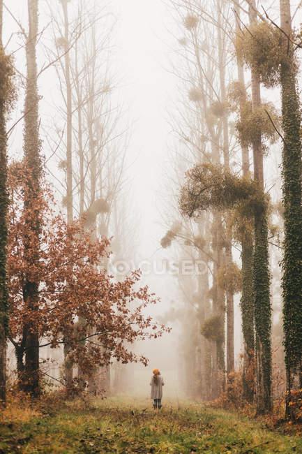 Mujer de pie en el bosque de niebla - foto de stock