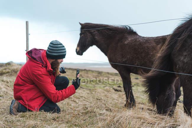 Принимая Фото Исландские лошади — стоковое фото