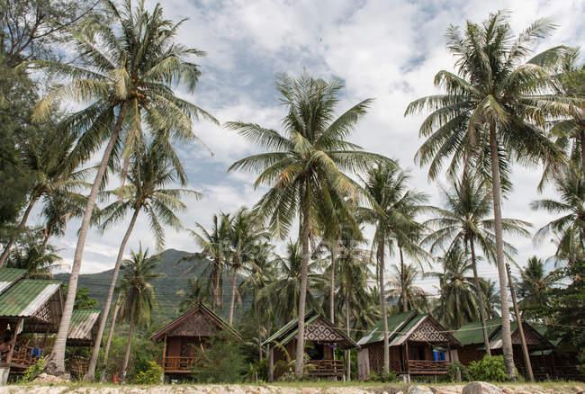 Palme e piccoli bungalow — Foto stock