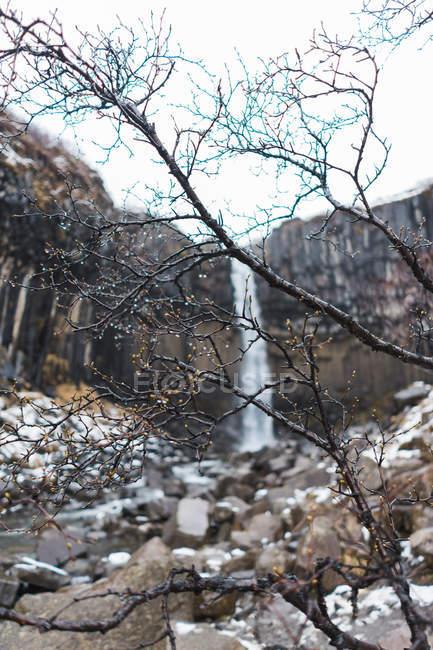 Galhos de primavera e cachoeira — Fotografia de Stock