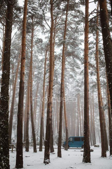 Синій Ван припарковані в зимовому лісі — стокове фото