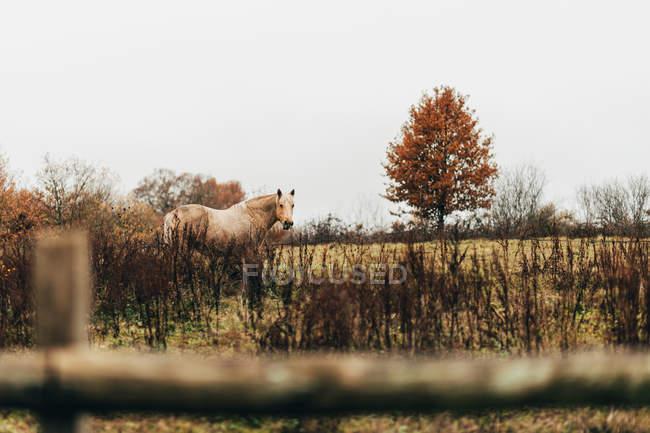 Weißes Pferd stehend in der herbstlichen Natur — Stockfoto