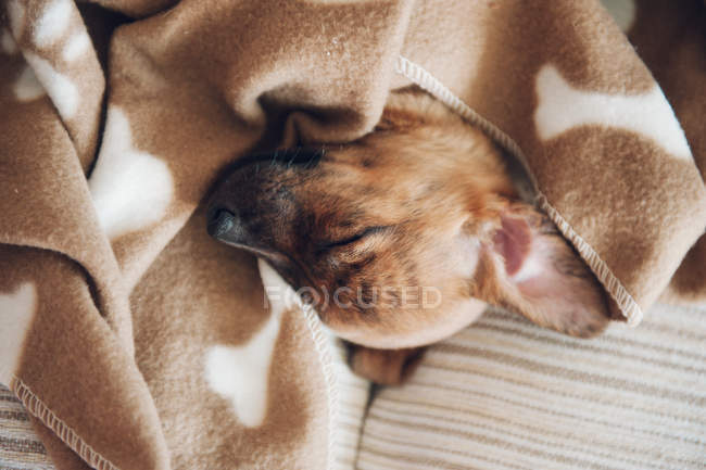 Puppy sleeping on brown blanket — Stock Photo