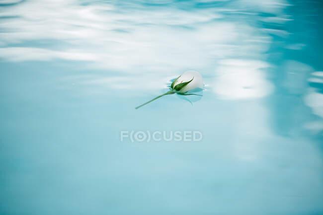 Белый цветок на голубой воде — стоковое фото