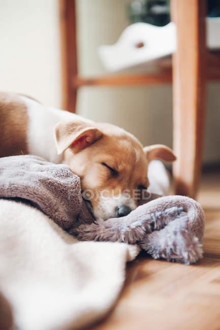 Цуценя спати на ковдру — стокове фото