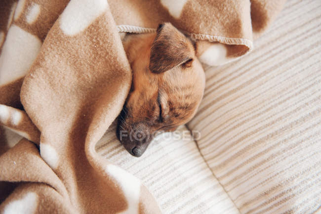 Puppy sleeping on sofa — Stock Photo