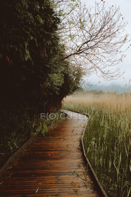 Paved walkway in green forest — Stock Photo