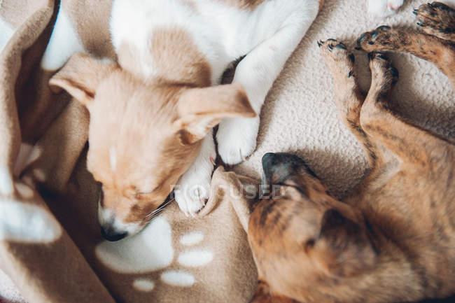 Щенки, спокойно спать вместе — стоковое фото