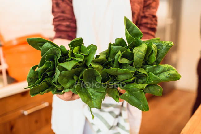 Hands holding bunch of spinach — Stock Photo