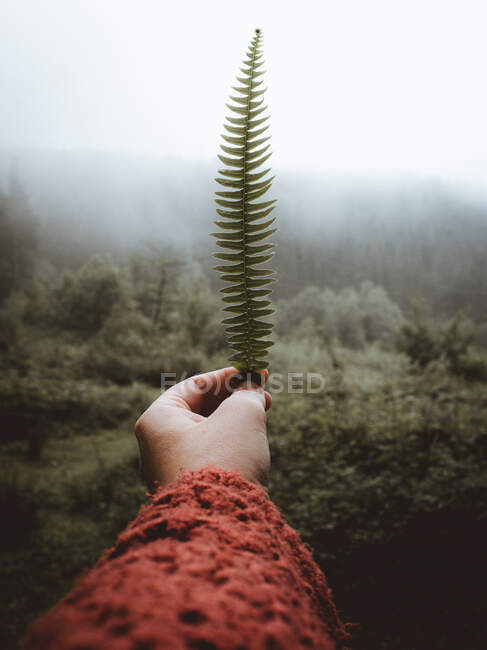 Hand in red holding small fern in mist — Stock Photo