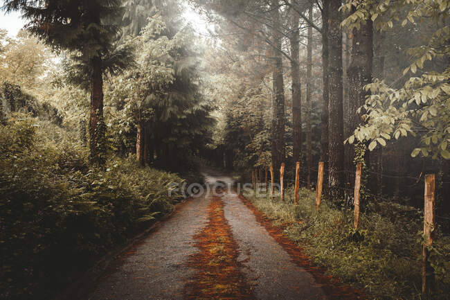 Mysterious road running away among green trees and bushes in majestic forest, Bizkaia — Stock Photo
