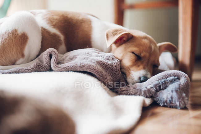 Cute puppy sleeping on blanket — Stock Photo