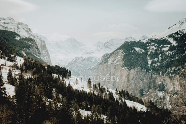 Evergreen forest and mountains — Stock Photo