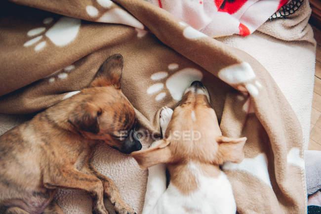 Cuccioli che dormono su plaid — Foto stock
