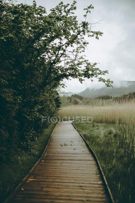 Passerella pavimentata nel verde della foresta — Foto stock