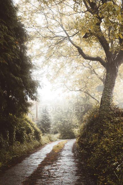 Estrada reta na floresta bonita mista — Fotografia de Stock