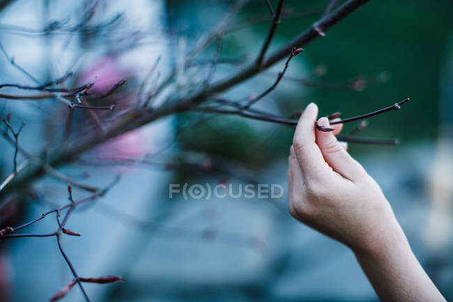 Human hand touching leafless branch — Stock Photo