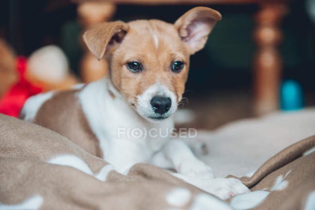 Thoughtful puppy lying on plaid — Stock Photo