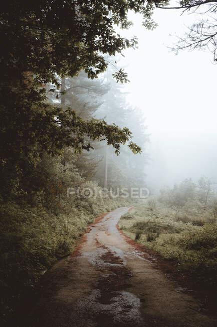 Дорога в смешанном красивом лесу — стоковое фото