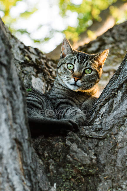 Stripped cat lying on tree in nature — Stock Photo