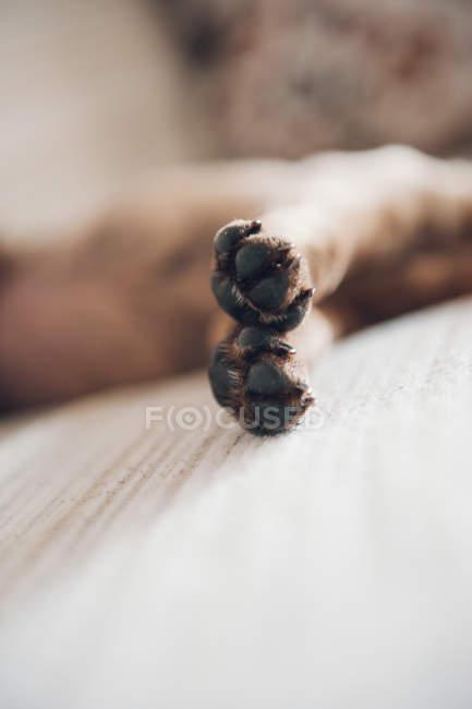 Лапы лежал коричневый щенок — стоковое фото