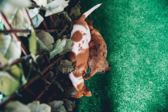 Carino cuccioli giocare a recinzione — Foto stock