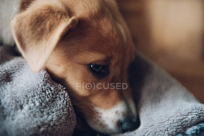 Cute puppy lying on blanket — Stock Photo