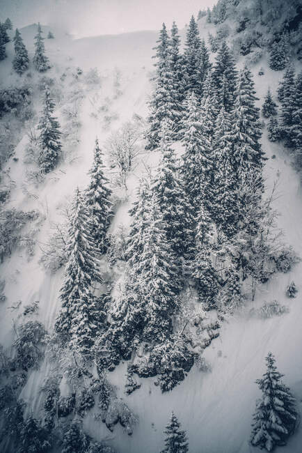 Snowy pine trees snow landscape. — Stock Photo