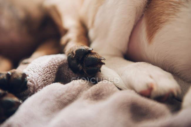 Patas de dos cachorros durmiendo - foto de stock