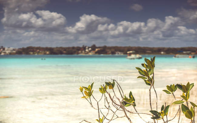 Plant growing on coast of turquoise Caribbean sea — Stock Photo