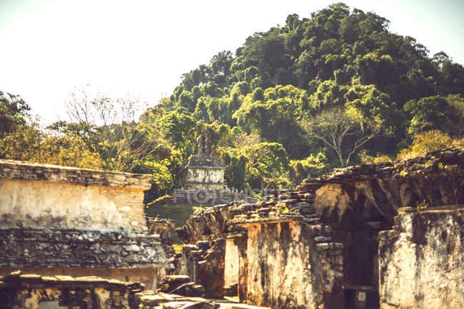 Руїни майя піраміди, вул. Паленке, Чьяпас, Мексика — стокове фото