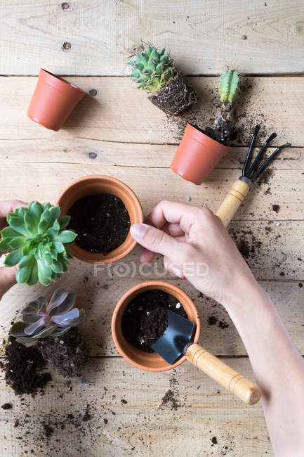 Close-up of human hands planting cactus plants — Stockfoto