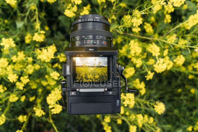 Primer plano de la cámara fotográfica retro con foto de la naturaleza con flores amarillas en exhibición - foto de stock