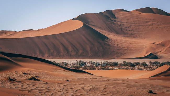 Dunas de areias em dia de sol no deserto da Namíbia — Fotografia de Stock