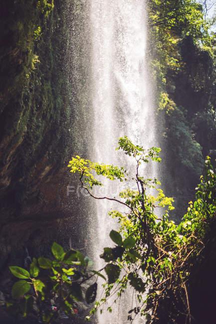 Majestosa Cachoeira fluindo na selva, México — Fotografia de Stock