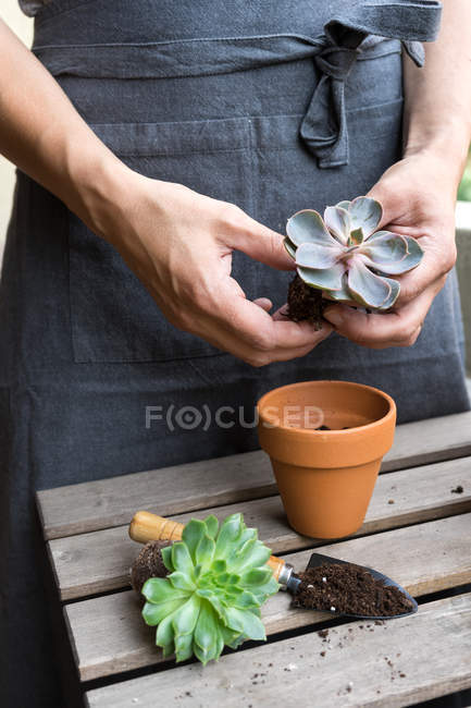 Human hands planting cactus plant in pot — Stock Photo