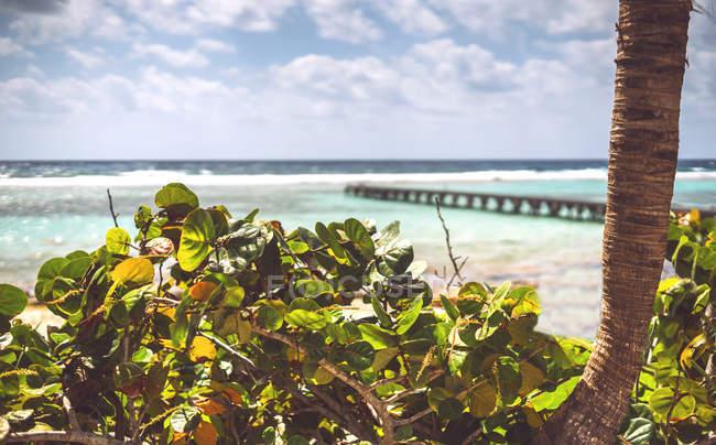Arbustes poussant sur le rivage de la mer des Caraïbes par temps ensoleillé, Mexique — Photo de stock