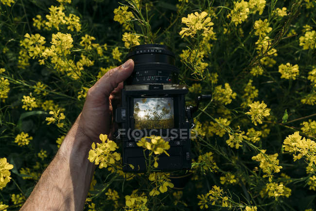 Close-up do braço humano tirar fotos de flores amarelas na natureza — Fotografia de Stock