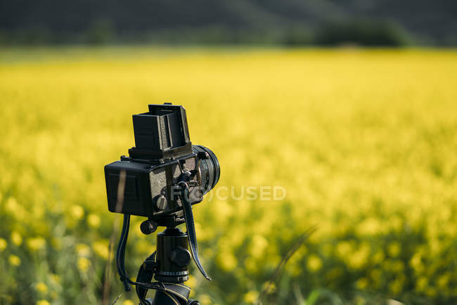 Retro photo camera on field of yellow flowers — Stock Photo