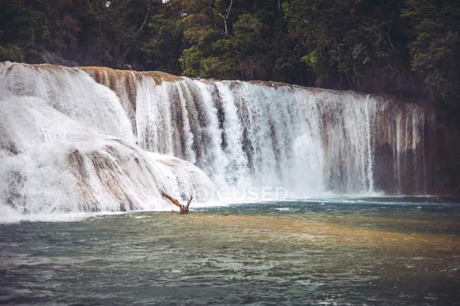Водоспад хлюпалися у джунглях у Чьяпас, Мексика — стокове фото