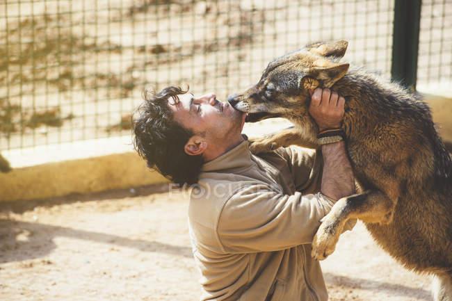 Homme qui joue avec le loup en cage au zoo — Photo de stock