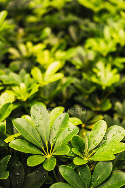 Small droplets of clean water covering leaves of plants in garden — Stock Photo