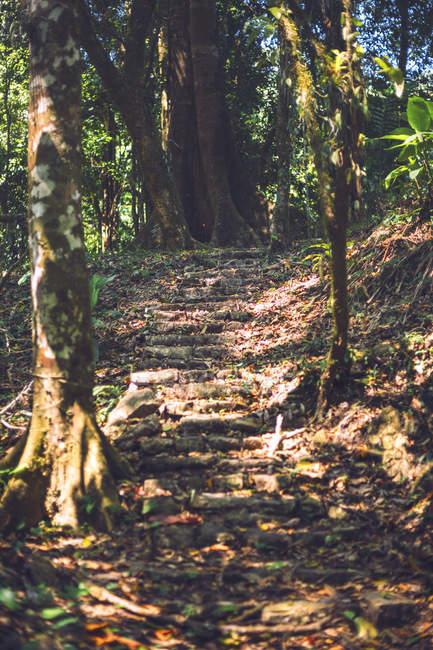 Scala Maya danneggiata situata nella città di Palenque in Chiapas, Messico — Foto stock