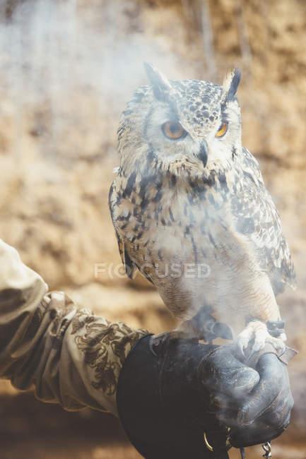 Nahaufnahme einer Eule, die mit einem Lederhandschuh in Rauch sitzt — Stockfoto