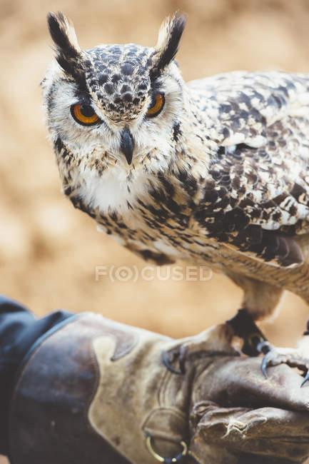 Eule mit Handschuhen in der Natur — Stockfoto