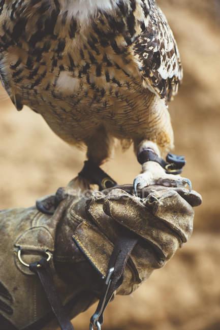 Nahaufnahme einer Eule, die mit Handschuhen in der Natur steht — Stockfoto