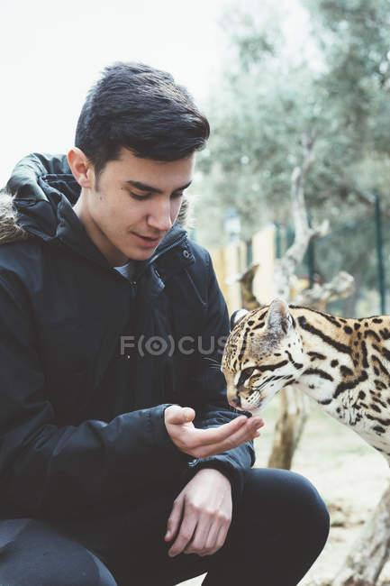 Молодой человек, кормления леопарда в зоопарке — стоковое фото