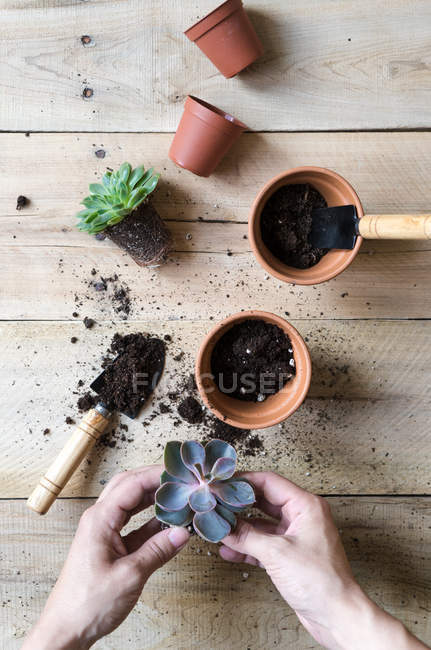 Close-up of human hands planting cactus plants — Stock Photo