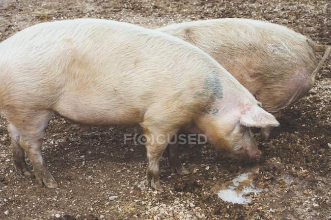 Permanent de gros reliés à pâte ferme — Photo de stock