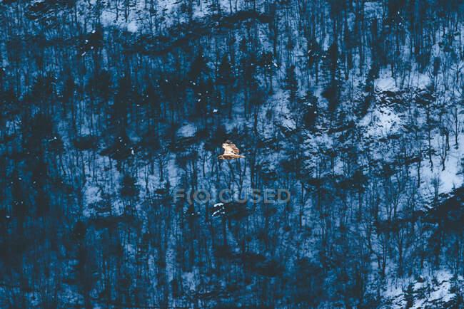 Vista aérea al bosque nevado - foto de stock